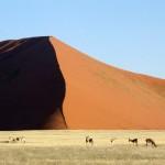 Dune et gazelles